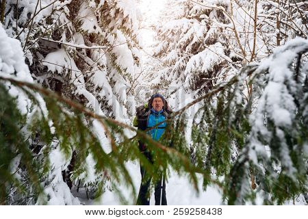 Happy Adventurer, With Big Backpack, Stands In Snowshoes Among Huge Pine Trees Covered With Snow And