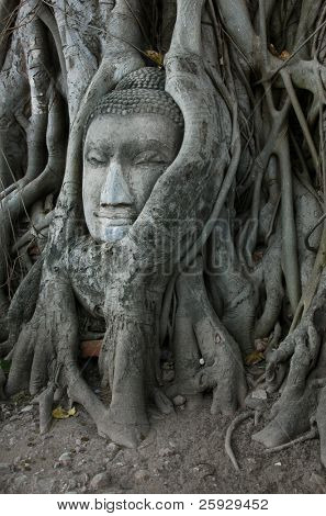 Stone head of Buddha nestled in the embrace of bodhi tree's roots in Ayutthaya, Thailand