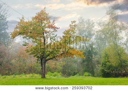 Oak Tree On The Grassy Park Meadow. Lovely Foggy Autumn Nature Scenery.