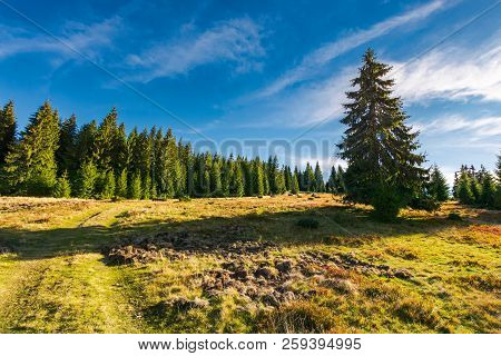 Road Uphill Into The Spruce Forest. Beautiful Landscape In Mountains. Sunny And Warm October Morning