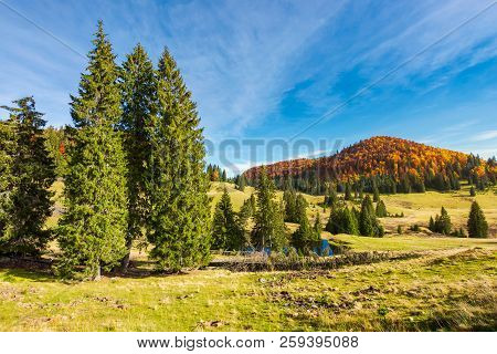 Spruce Trees In The Valley In Autumn. Beautiful Landscape In Mountains. Gorgeous Light And Mood, Won
