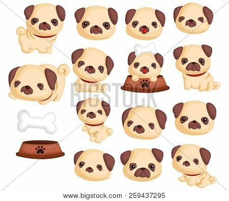 Pugs Vector Set Containing Many Pugs Poses
