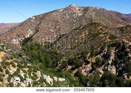 Riparian woodland with lush trees and plants surrounded by arid desert terrain including sage plants taken at Deep Creek in the San Bernardino Mountains, CA poster