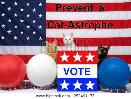 3 Unique Diverse Cats Sitting Behind An Election Ballot Box With Vote On The Front, Red White Blue B