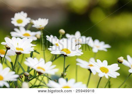 Early summer Flowers. Short depth-of-field.