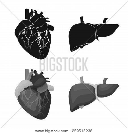 Vector Illustration Of Body And Human Symbol. Set Of Body And Medical Stock Symbol For Web.