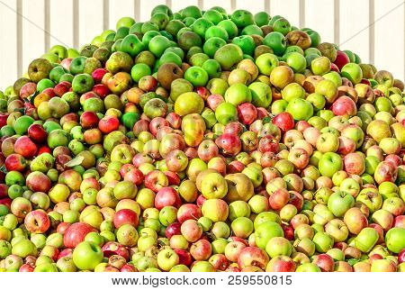 Rich Apple Harvest In 2018. Apple Mountain For Making Cider And Apple Juice In Hesse, Germany