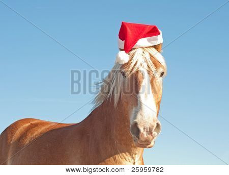 Humorous image of Santa's huge big helper - a blond Belgian Draft horse wearing a santa hat ready to help!