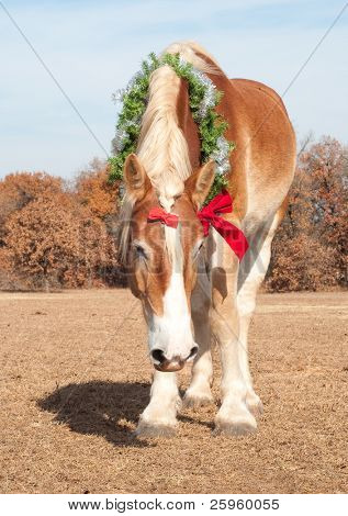 Handsome Belgian Draft horse in a Christmas wreath and a bow in his mane holding his head low poster