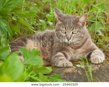 Blue tabby kitty cat resting on a rock under a tree poster
