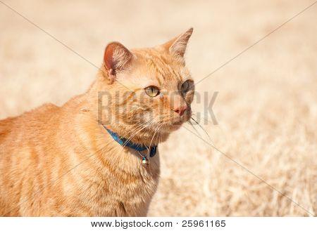 Beautiful orange tabby cat in winter sun poster