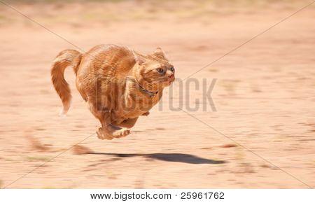 Orange Tabby-Katze quer durch roten Sand vollen Geschwindigkeit