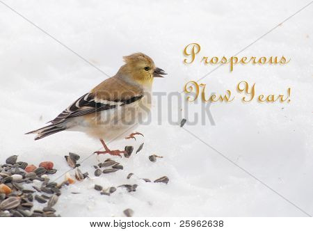 Card with Gold Finch in winter plumage indulging bird seed; with golden Prosperous New Year -text