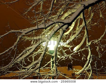 Lamp snowed up behind the branch