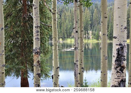 Sunlight Touched The Lake And The Aspen Trees For Just A Moment, Casting A Yellowish Glow Over Every