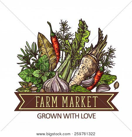 Herbs, Vegetables And Spices, Farm Market Design. Green Basil, Chili Pepper And Garlic, Thyme, Rosem