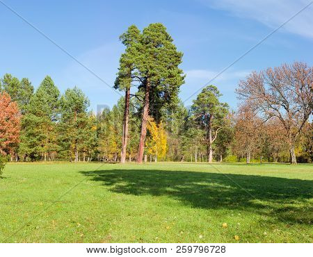 Glade In The Park, Covered Grass Among The Conifers And Deciduous Trees In Autumn Day