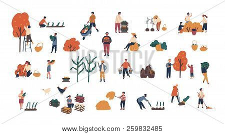 Crowd Of Tiny People Gathering Crops Or Seasonal Harvest. Bundle Of Men And Women Collecting Ripe Fr