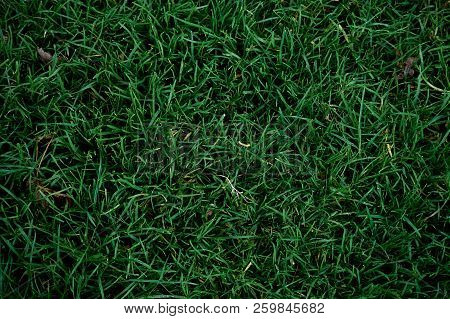 Green Grass Close Up Spring And Summer Background.