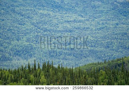Lush Green Scenic View Of The Boreal Tundra Forest. Row Of Trees In Foreground, Lots Of Copyspace In