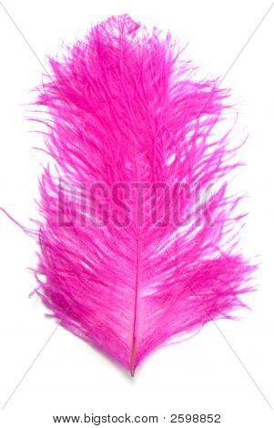 Soft feather on white background studio shot poster