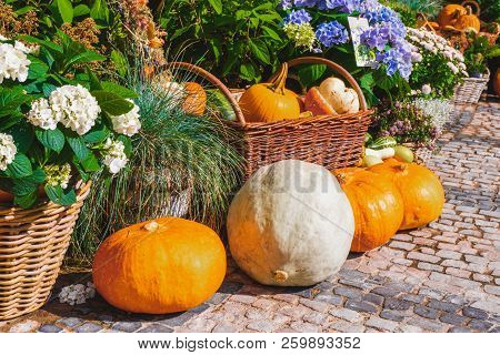 Seasonal Decorations With Pumpkins. Autumn Decorations. Pumpkins Halloween.autumn Still Life. Autumn