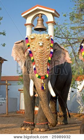Decorated elephants on parade at the annual elephant festival in  India