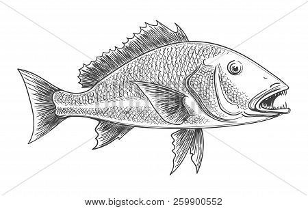 Fish Engraving. Fishes Animal Retro Ink Sketch Isolated On White Background For Vintage Fishing Deco