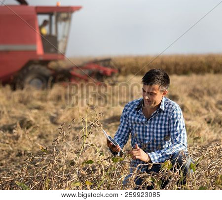 Farmer In Soybean Field During Harvest