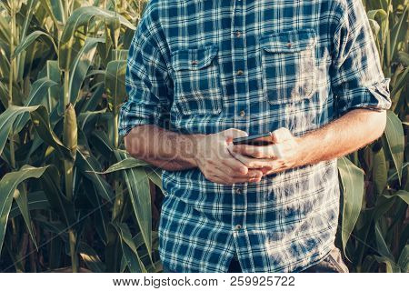 Farmer Using Smartphone In Corn Field, Concept Of Smart Farming Includes Modern Technology And Softw