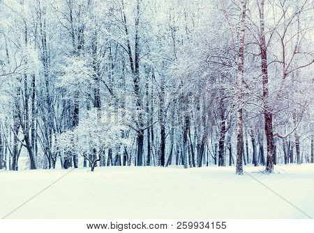 Winter forest landscape - forest trees covered with snow. Winter nature scene. Winter forest in cloudy winter day