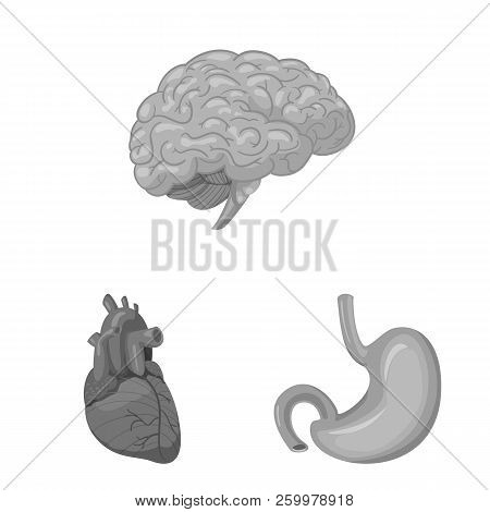 Vector Illustration Of Body And Human Icon. Collection Of Body And Medical Vector Icon For Stock.
