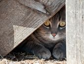 Hide a kitty - cat hiding under wooden steps poster