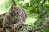 Spotted blue tabby cat in a tree poster