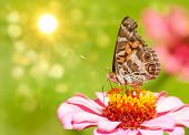 Dreamy image of an American Painted Lady butterfly poster