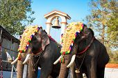 Decorated elephants for parade at the annual festival in Siva Temple, Cochin, India poster