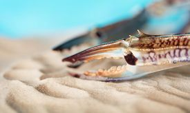 6462937 Crab Claws On Sand