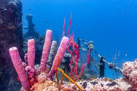 Coral Reef In Carbiiean Sea Wreck Off The Coast Of The Isnalnd Of Roatan