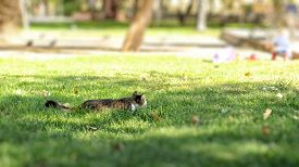 A Gray Cat Hides In The Green Grass In The City Park In Order To Hunt For Pigeons. Urban Landscape.