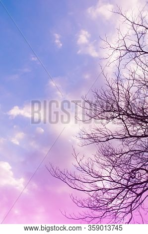 Blue Sky ,pink,purple Color With Bough Of Tree. Beautiful Natural Sunset Of Sky And Tree Abstract Or