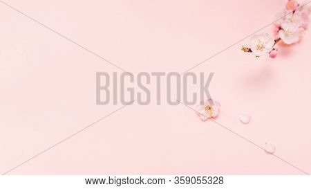 Spring Border Background With Beautiful Pink Flowering Branch. Pastel Pink Background, Bloom Delicat