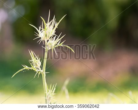 Close-up Of A Small Thorny Plant In Sunlight On A Blurred Colorful Background