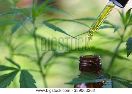 Hemp Flowers And Droplet Dosing A Biological And Ecological Hemp Plant Herbal Pharmaceutical Cbd Oil