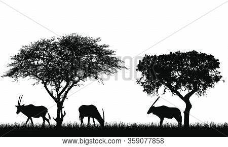 Illustration Of African Landscape On Safari With Antelopes Or Gazelles Under Tropical Trees. Animals