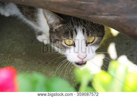 Portrait Of A Cat Cautiously Peeping Out Of The Hiding