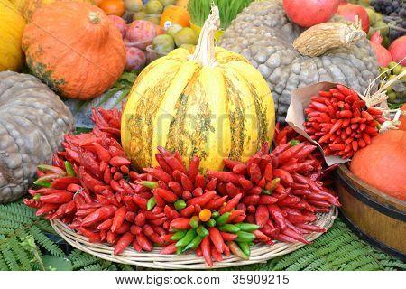 A Bountiful Fall Harvest