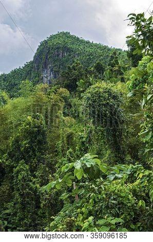 Lush Tropical Rainforest And El Yunque Peak In Puerto Rico