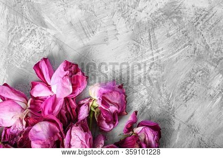 Lonely Wilted Red Roses On A Gray Stone Background. Dead Flowers On A Textural Background Top View.