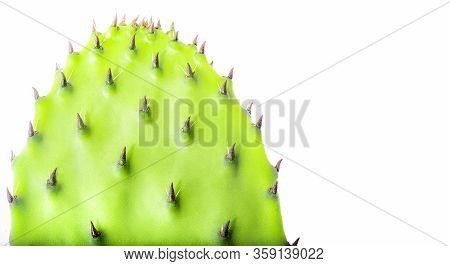 Cactus On A White Background. Isolate. With Copy Space.
