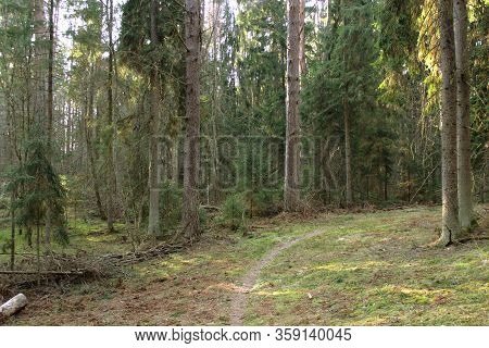 Path in green woods. Beautiful green summer forest. Walk in summer forest. Road in the mystique forest. Nature reserve in Russia. Camping by mixed forest